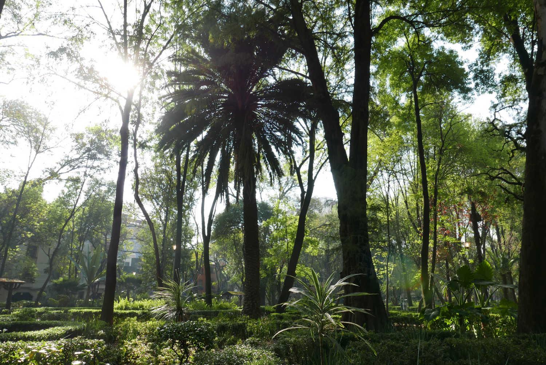 Parque Mexico in Condesa area