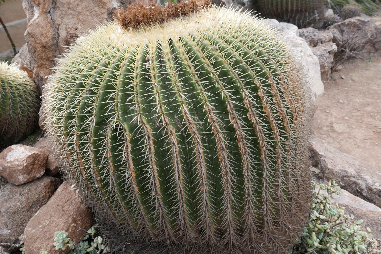 Cactus in botanical garden in San Miguel de Allende