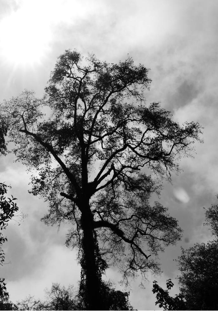 Mysterious tree somewhere along the hike to Lake Chicabal