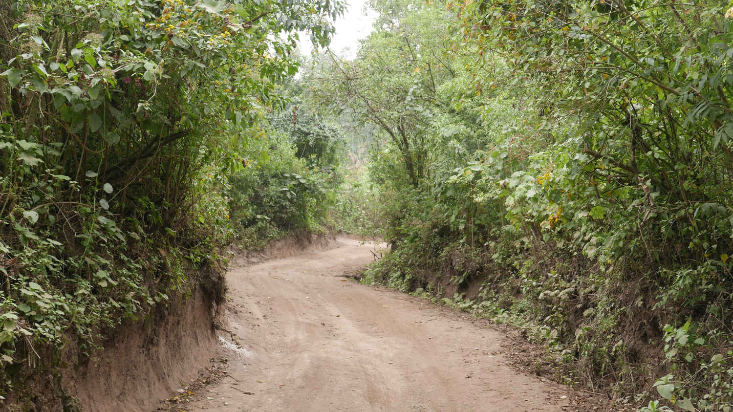 The second part of the ascent to Lake Chicabal is a dirt road