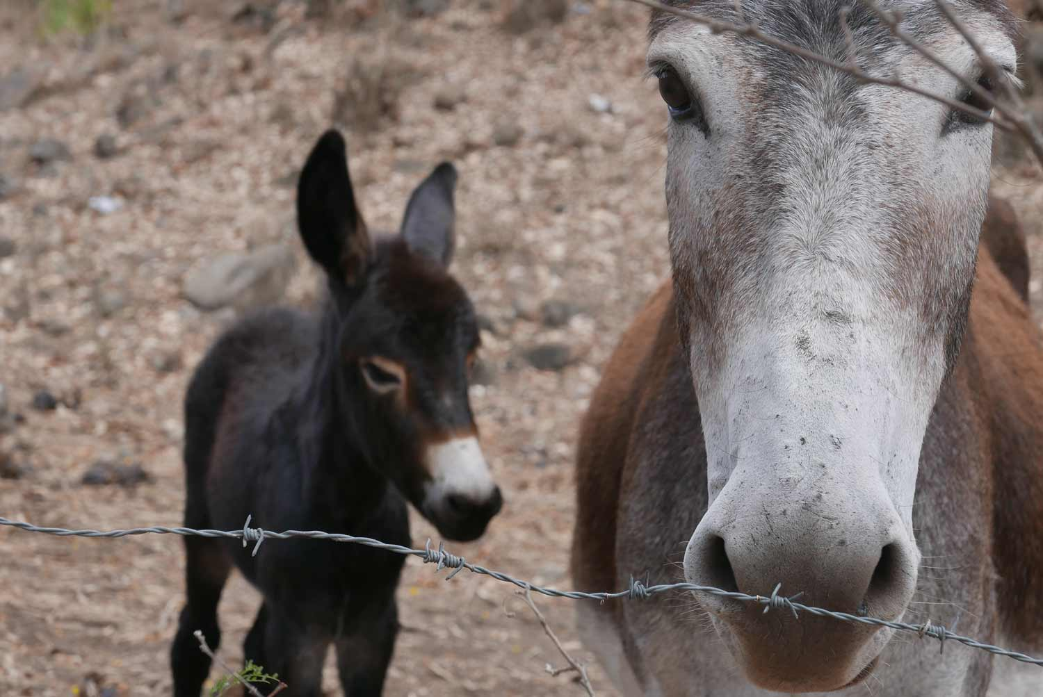 Somoto canyon is known for its beautiful donkeys