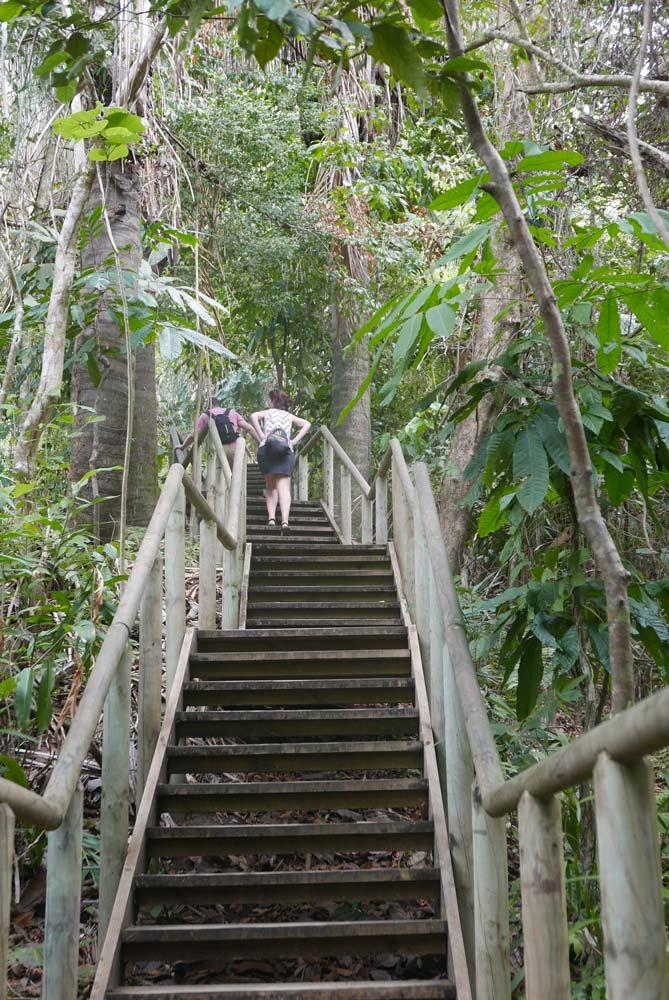 Stairs on the Sendero Mirador in Manuel Antonio national park