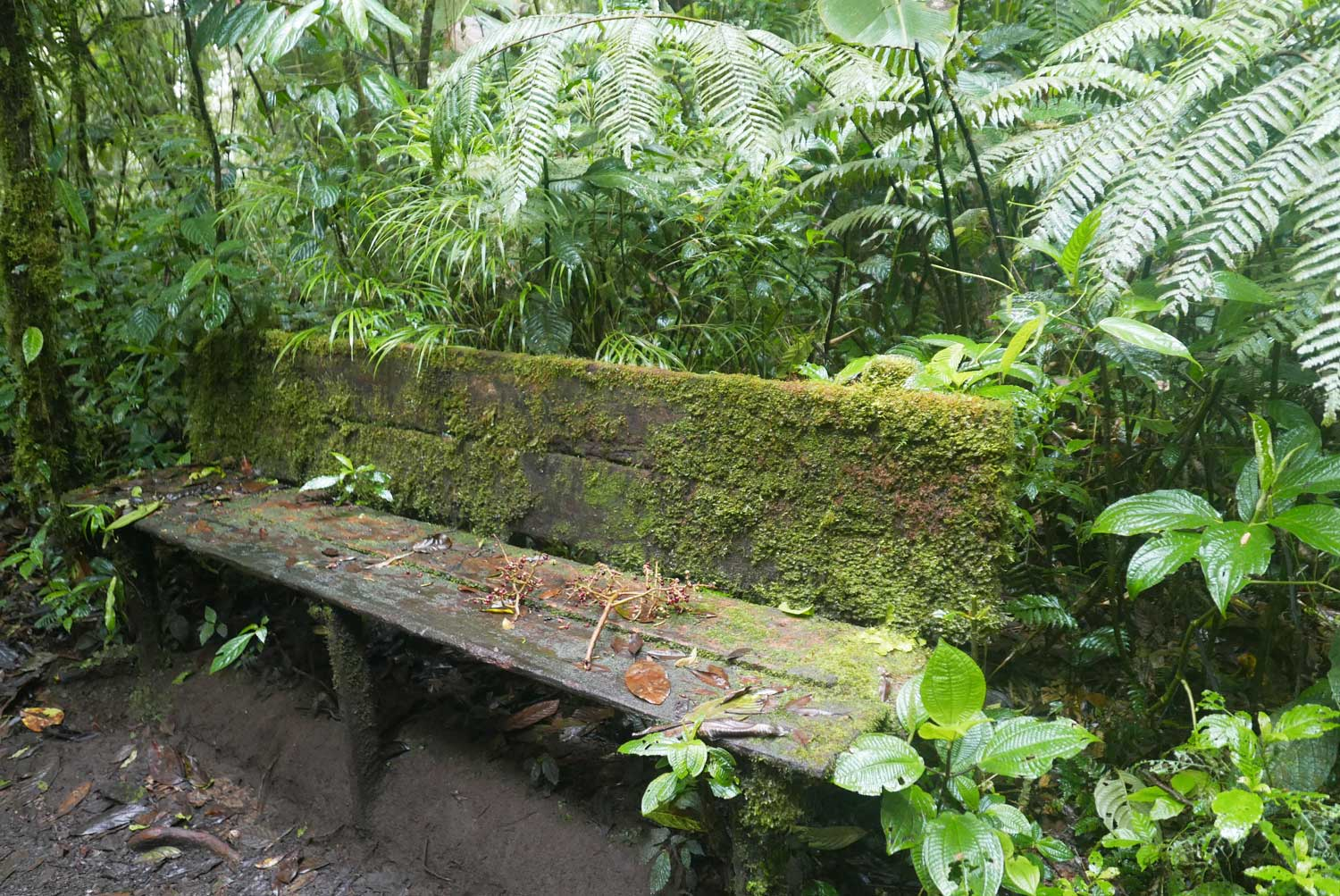 One of the few benches to rest in Santa Elena cloud forest