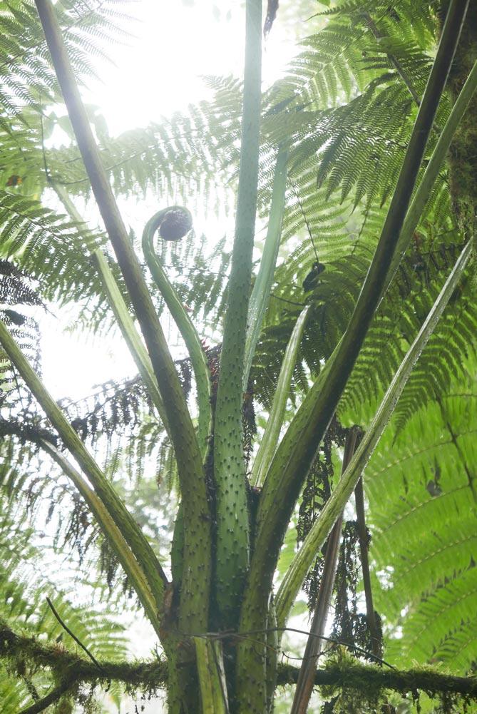Gracious plant / tree in Santa Elena cloud forest