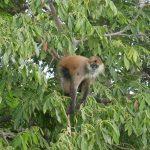 Monkey Island on Las Isletas