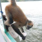Monkey Pacho at Las Isletas
