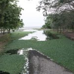 Swamp near Las Isletas