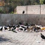 Birds combing through the garbage near the center of Matagalpa