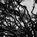 Trees in Matagalpa, Ruben Dario park